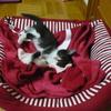 ラウラのベッドで。。。