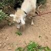 ヤギとかけっこして、運動することへの自信を取り戻した。