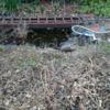庭の池をリニューアル・・・するか