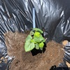 市民菜園で野菜づくりに挑戦!8