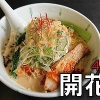 【激うま】老舗ラーメン屋「開花屋楽麺荘」のオススメのメニューやランチセットの紹介!