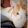 爪もあって仔猫は猫となりつつあり 長谷川かな女