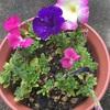 次々と開花✨
