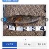 平日釣行…昼の部☆彡磯子海釣り施設