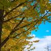 銀杏と武蔵野線