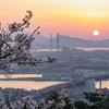 北九州市高塔山で桜と朝日を撮ってきた話