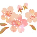 花咲かsaika
