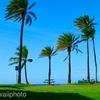 今回のハワイに恋して2・・ノースショア