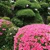 5月の花壇、、、