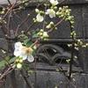 春( ´ ▽ ` )ノ
