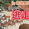 【観光 動画】奈良公園 シカ煎餅に群がる鹿が怖い…。