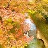 【北野八幡宮】普段とは違った景色✨学問の神様のもみじ🍁苑を撮りに行こう🤳