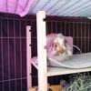 うさぎ小屋(ケージ)、冬の隙間風対策をしたよ。