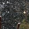 春の嵐に襲われた北海道ではなごり雪に!?季節外れの積雪の恐れあり!!