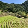 山で暮らしている人からもらった野菜と限界集落の話