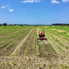 真夏の日々・・・大豆の中耕除草と魯迅とニゴロブナの放流と畦畔の草刈りと出穂とセスジスズメ蛾の幼虫などなど