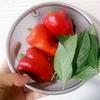 苗から育てたパプリカ栽培。収穫までに時間はかかるけど、収穫期間が長いのでお勧め野菜!