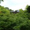 人のいない、新緑の東福寺