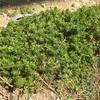 庭に生えてくる雑草たち