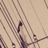 07:30~*〈うさぎハウス〉鳥の鳴き声に誘われて、ベランダに出たら、すずめが屋根を飛び越えた~*