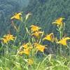 北茨城,花園の花と虫