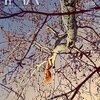 『IMA』Vol.15と『ナショナルジオグラフィック』3月号が一緒に届いた。