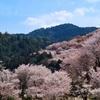 〈絶景奈良〉吉野山 中千本・下千本の桜見どころ巡りと絶景ランチ