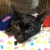 東京キャットガーディアンで死亡した猫たちの悲しい末路
