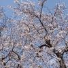 我孫子駅付近の桜