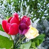 チューリップの花が咲き終えたら ~「プリンセスビクトリア」でスワッグ作り~