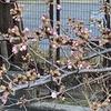 桜の下に何が埋まっているのかは私のカラテで暴こうか