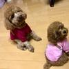 犬の服ネットで激安購入
