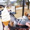 大人気豆腐ドーナツ¥72☆庭で遊べる豆腐屋さん