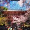桜見るなら醍醐寺、随心院、東寺のライトアップ