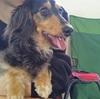 【愛犬こごま物語】トリミング編① 山梨でおすすめ!送迎無料の『テディーハウス』