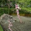 ドクた、の桜・デジカメ徘徊  8