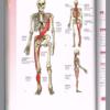 身体のバランスが変わっていく。身体の捻れが戻っていく過程を体験する。
