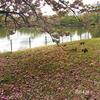 八重桜 2020.4.24