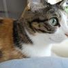 【愛猫日記】毎日アンヌさん#254