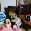 【夢日記】7月23日 おばあさんの夢