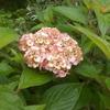 地味でも可憐に咲く花で満載の庭