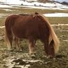クラブツーリズムのおすすめアイスランドツアー