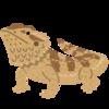 マンション住みでも面倒くさがりでも初心者でも飼えるペット、フトアゴヒゲトカゲの魅力を紹介!