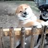 子犬に大歓迎されてひたすら懐かれる! 羨ましい動画