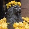 花盛りのライオン