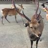 鹿のフン!奈良公園