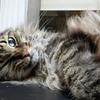 新築計画 こだわりの猫やぱさんが選ぶ最高の家電なの 序章