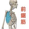 【ベンチプレス】肩甲骨・肩の動きの痛みや動きを改善!必須の前鋸筋ケアとは?