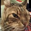 左目を摘出した猫 右目にはコンタクトレンズ