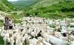 【フォトトピック】 清津市山羊牧場